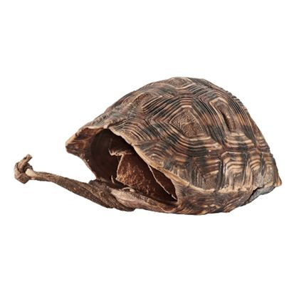 Box Box made of turtle shell