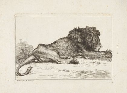 Bernard Picart A lion lying down