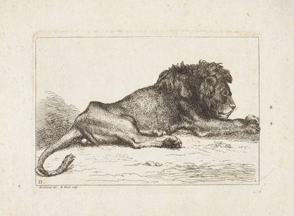 Ein liegender männlicher Löwe.