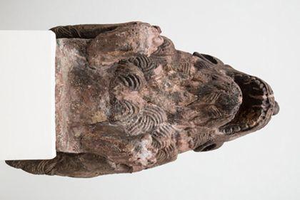 Sandsteinfigur eines Löwes als Wasserspeier, Ansicht von unten.