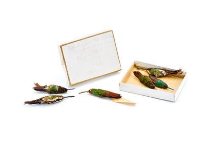 Eine weiße Schachtel in der drei Kolibri-Bälge liegen. Neben der Schaltel liegen drei weitere Kolibri-Bälge. Das Gefieder der Kolibris ist leuchtend gründ und violett. Der Deckel der Schachtel mit einer Beschriftung steht dahinter.